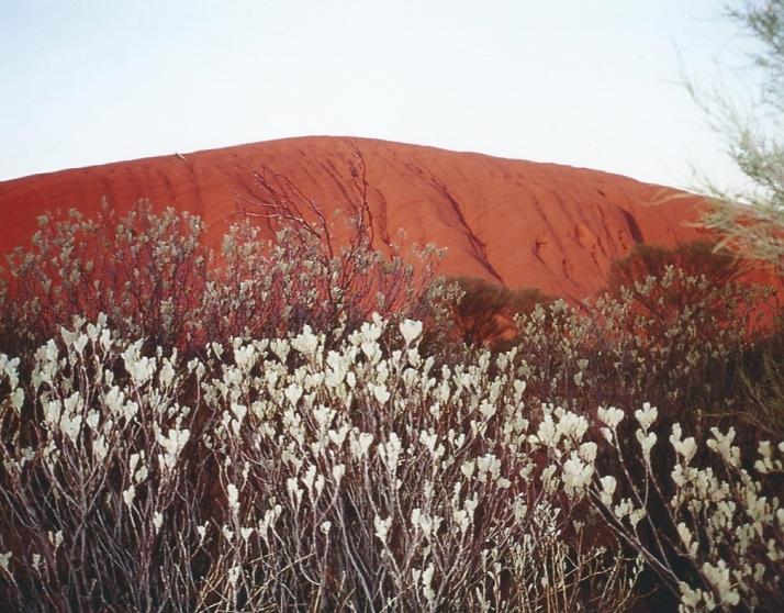Uluru, Jules Told Me