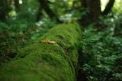 Forest Park, Szapucki