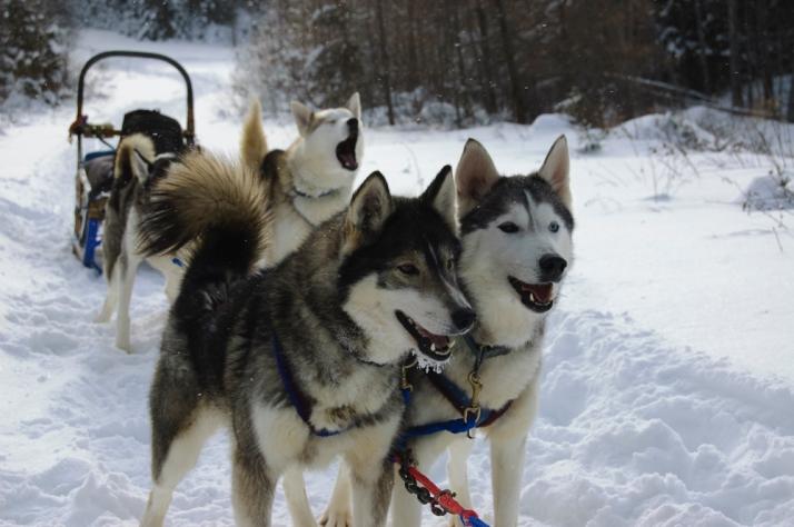 Winterdance Canada, EveryDamnNameisinUse
