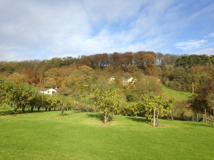 Apple orchards, Ampleforth