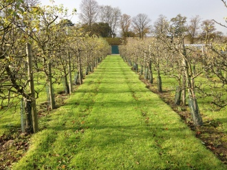 Cider orchards at Ampleforth