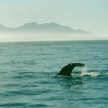 Whale watching, Kaikoura, New Zealand