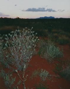 Uluru at dawn, Jules Told Me
