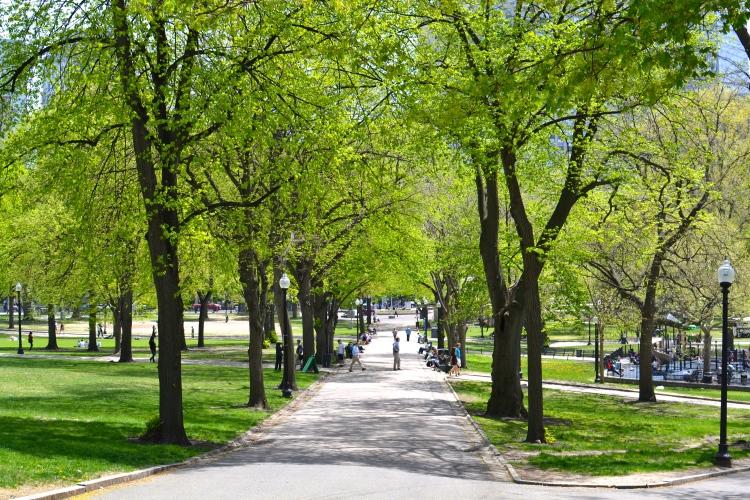 Spring Boston Commong, Vignesh Ananth