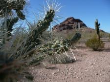 Sonoran Desert, Flavio Ensiki
