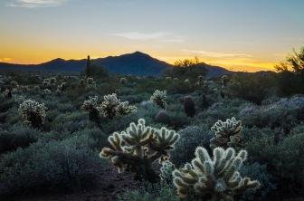 Sonoran Desert, Jeff Shewan