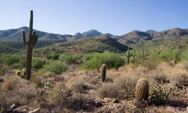 Sonoran Desert, Trond Wuellner